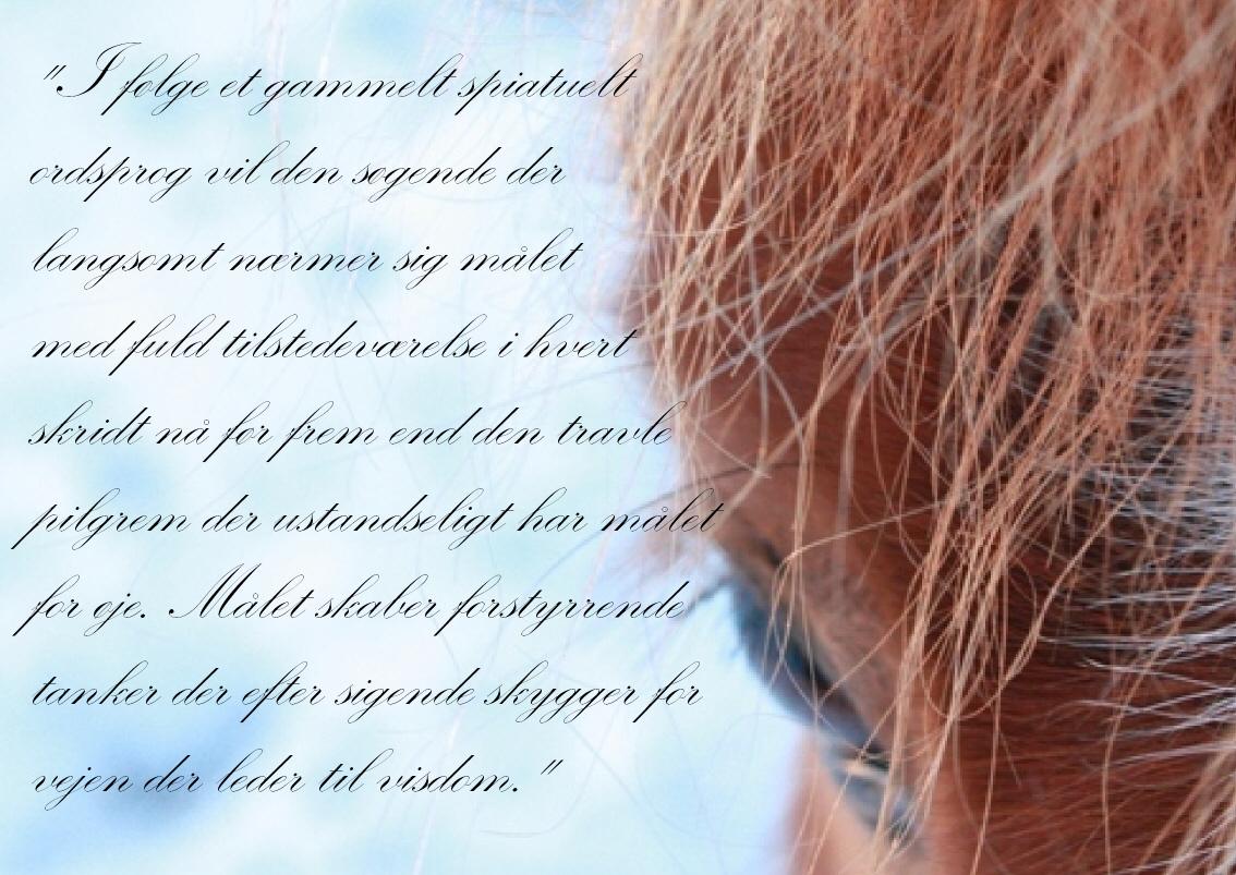 søde ordsprog hest citater