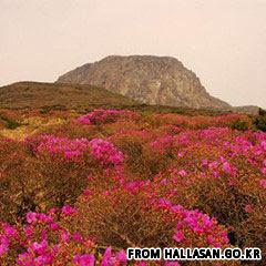 gunung api Hallasan korea selatan