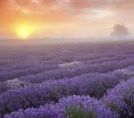 ♡ La Provence