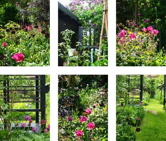 Haven i maj, hvor farverne er stærke og havens sorte skellet står som rolig baggrund til den farverige blomstring