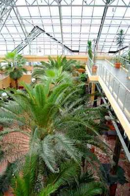 Wnętrze Palmiarni