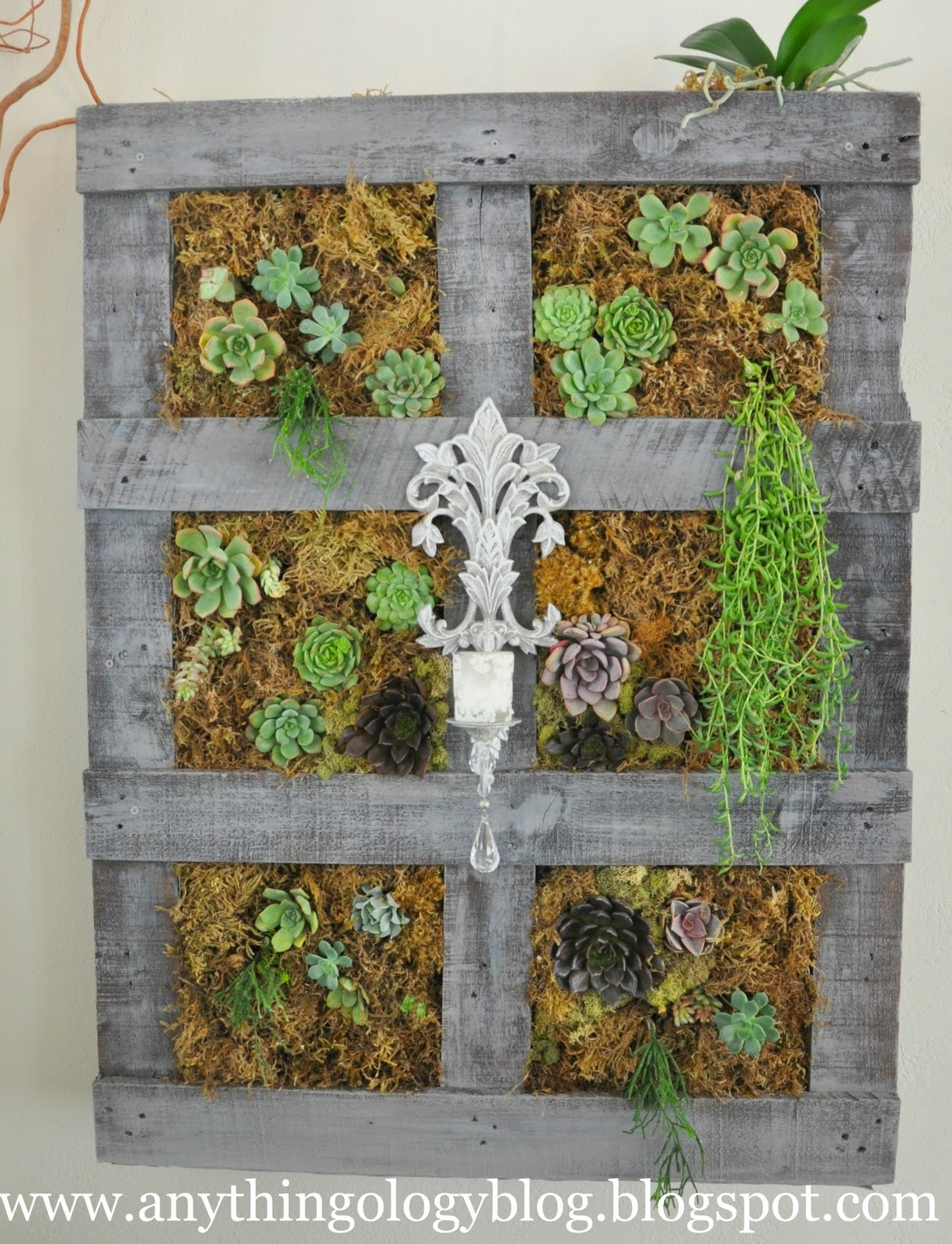 Indoor Vertical Succulent Garden A Vertical Garden Out Of A