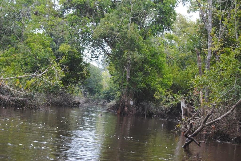 Habitat Orangutan Kalimantan