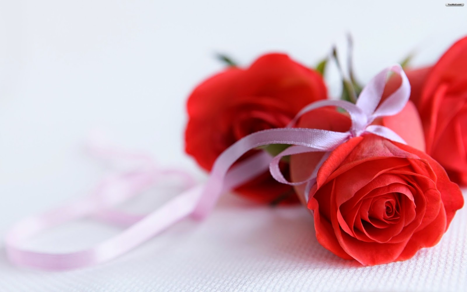 Beautiful pink rose wallpaper hd flowers wallpapers beautiful pink rose wallpaper izmirmasajfo
