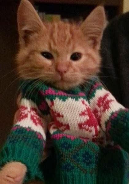 Fleetwood in his Maker s Mark Christmas SweaterCats In Christmas Sweaters