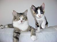 Lucero i Cloe, part d'una gran família