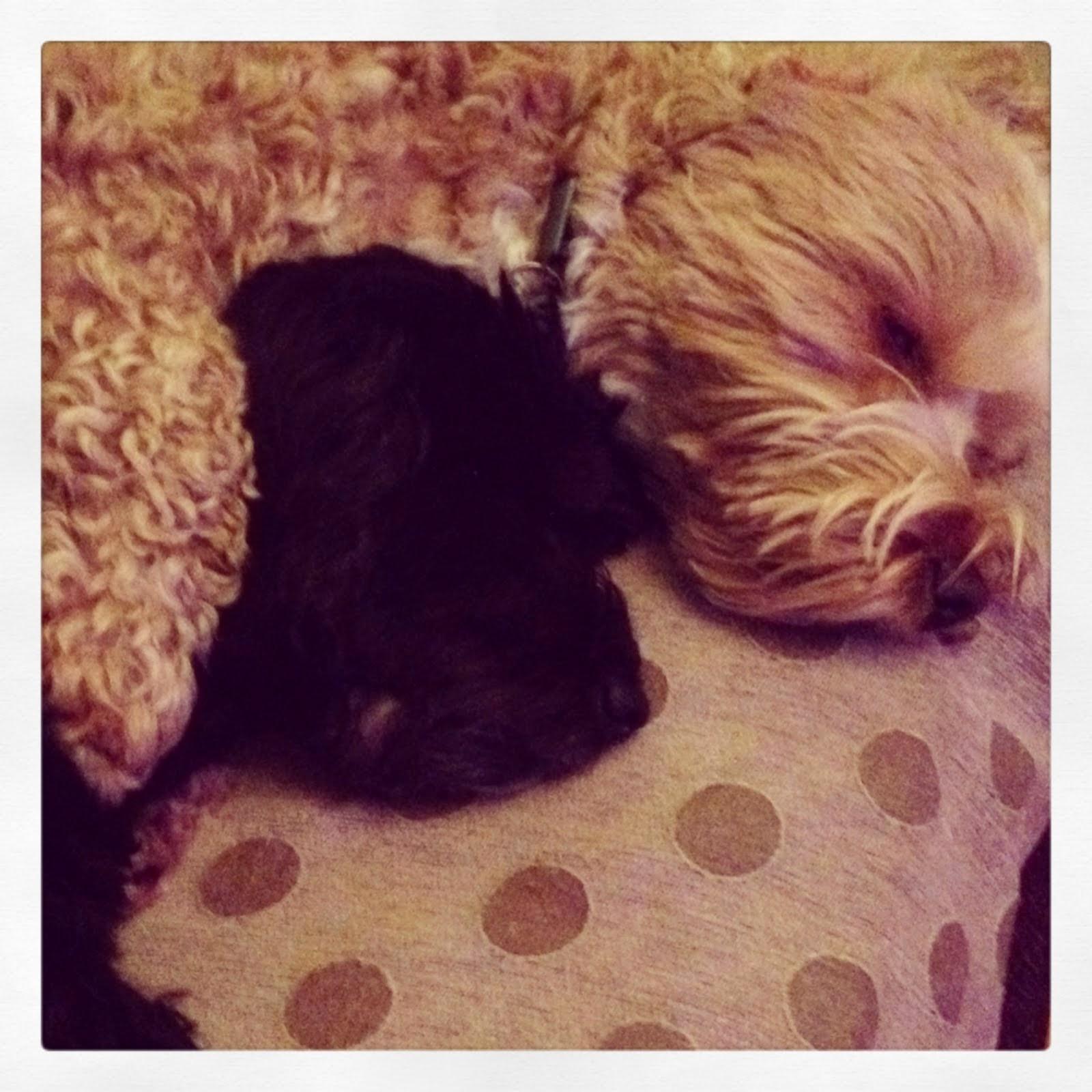 Rosie & Archie