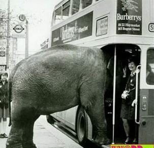 gambar gajah lucu
