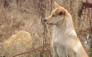 Kisah Anjing Setia