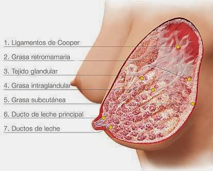 Mamas densas - Breast Cancer Information and Awareness