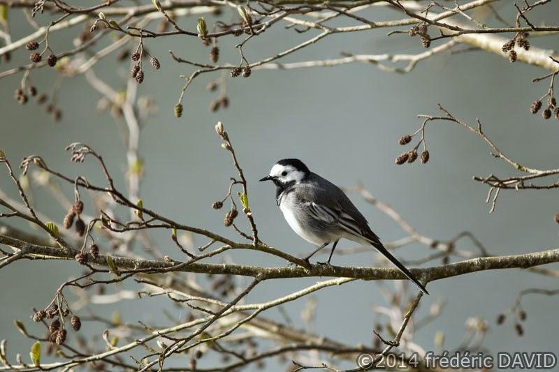 arbre branche nature oiseau bergeronnette grise Sorques Seine-et-Marne