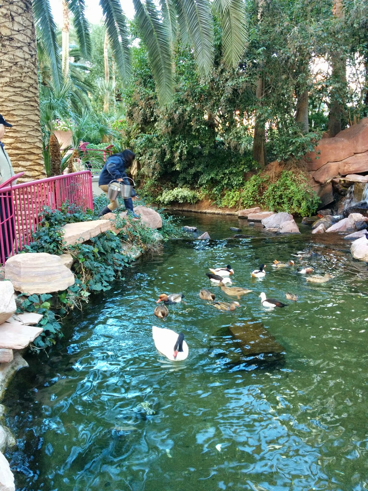 Wildlife Habitat at The Flamingo | Las Vegas