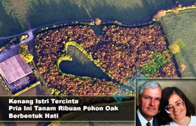 Mengenang isteri, seorang lelaki tanam ribuan pohon oak berbentuk hati