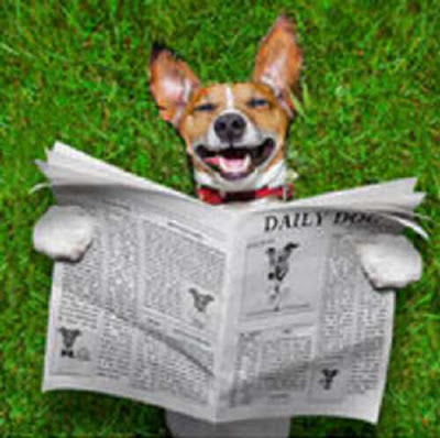 Dog reads the funny pages in newspaper first