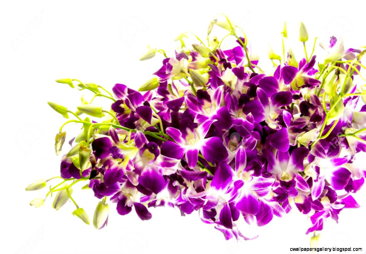Purple Orchids Bouquet On White Background Stock Photo Picture