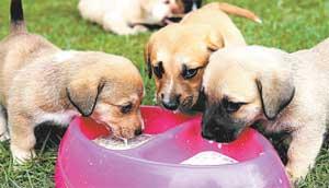 Segundo o estudo feito em Kyoto, os cachorros têm a capacidade, assim como o ser humano, de não agir somente por interesse