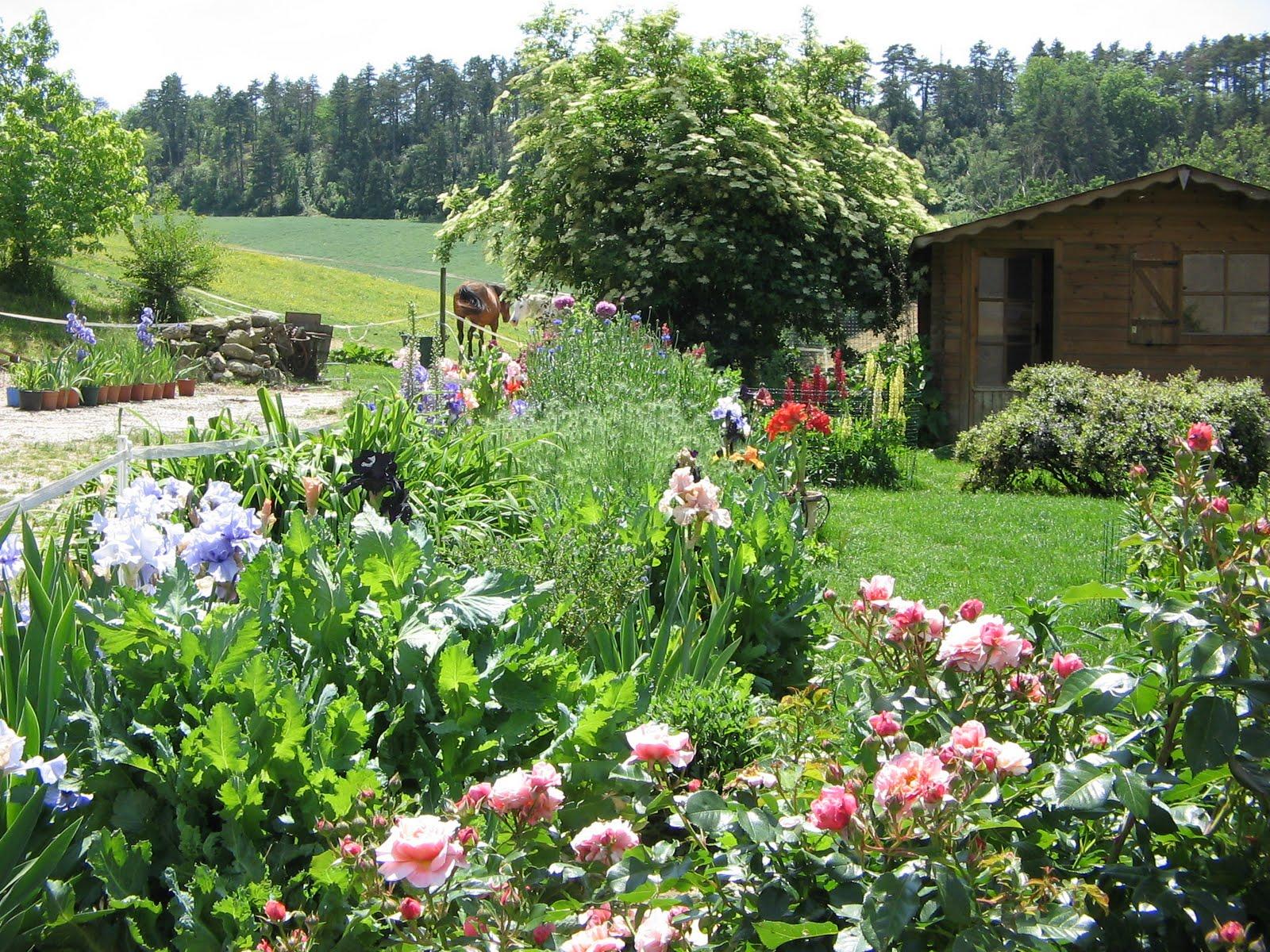 les chats d 39 hemera les iris des jardins 1. Black Bedroom Furniture Sets. Home Design Ideas