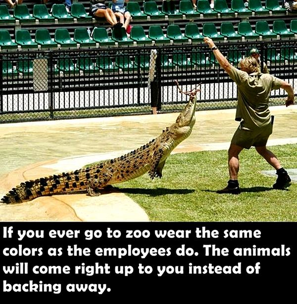 if you ever go to zoo wear the same colors as the employees do. The animals will come right up to you instead of backing away.