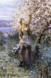 Zauber der Apfelblüten