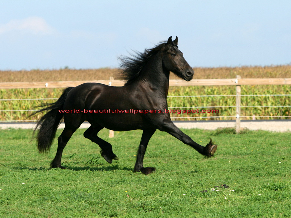 Beautiful Wallpapers: funny horse wallpapers