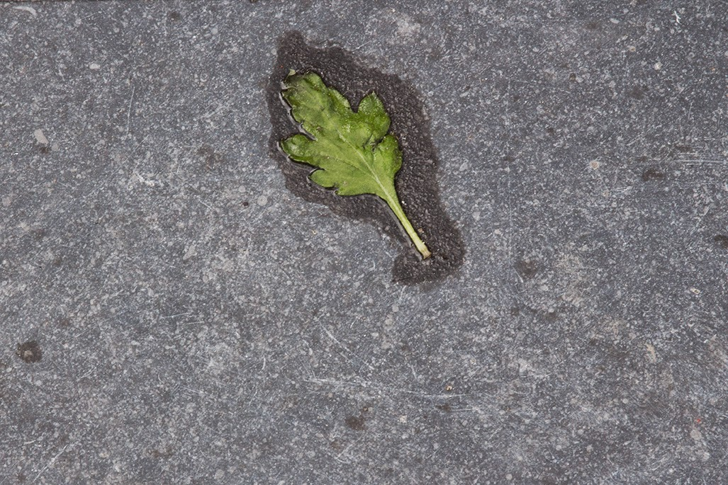 green leaf on sidewalk