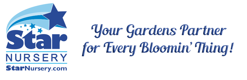 Star Nursery Blog