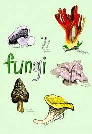 Mikologi Fungi Pada Manusia