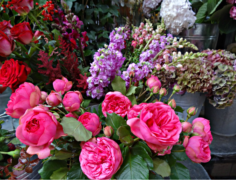 Flowers_Roses in Mayfair