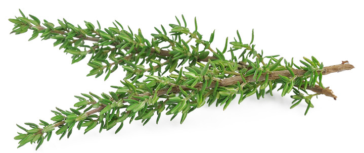 Thyme Health Benefits, Nutritional Value and Uses