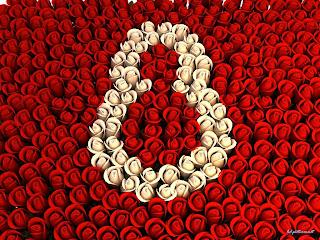 Bijele i crvene ruže za 8. mart čestitke slike besplatne pozadine za desktop download