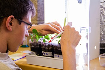 photo of a student measuring radish plants