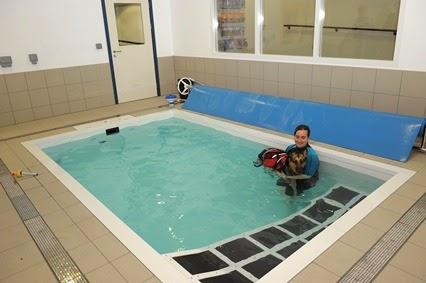 adestramento e condicionamento de cães