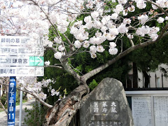 大倉幕府跡の桜
