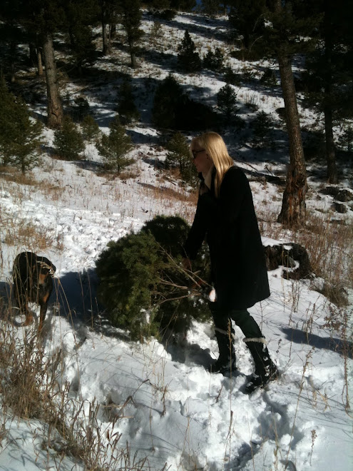Photo - We Cut Down a Christmas Tree, so much fun