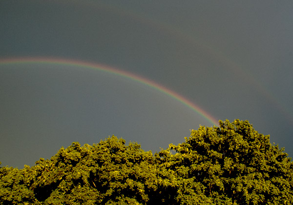 Regnbåge över trädkronor