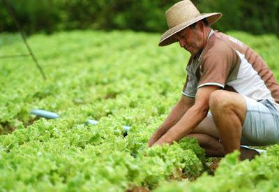 Governo destina quase R$ 29 bi para o Plano Safra da Agricultura Familiar.