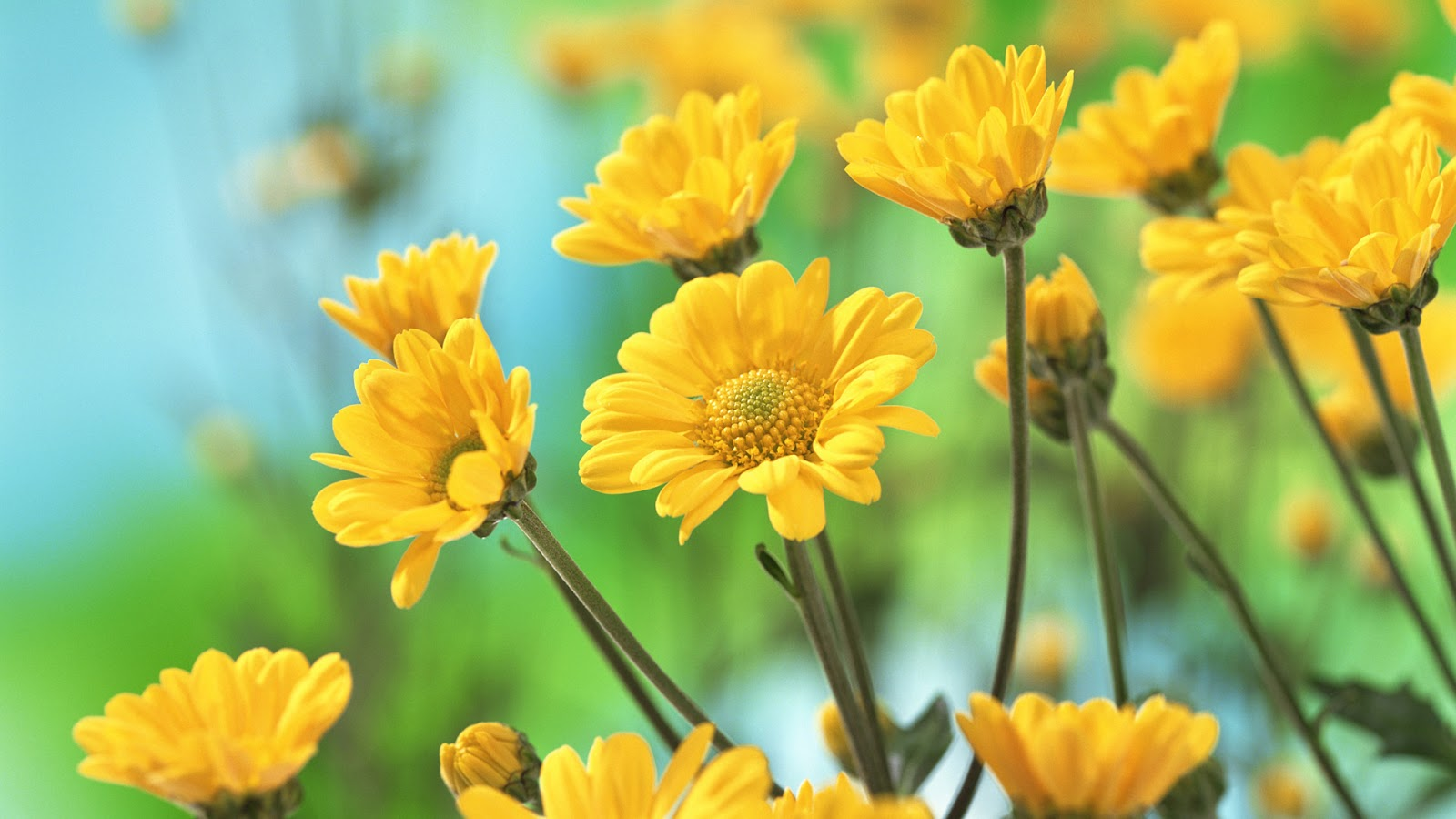 flowers for flower lovers.: Desk top HD Beautiful flowers wallpapers.