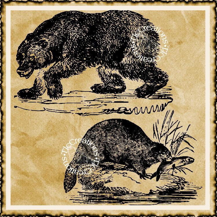 Beaver and Bear