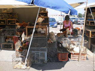 portugal, animal cruelty, markets