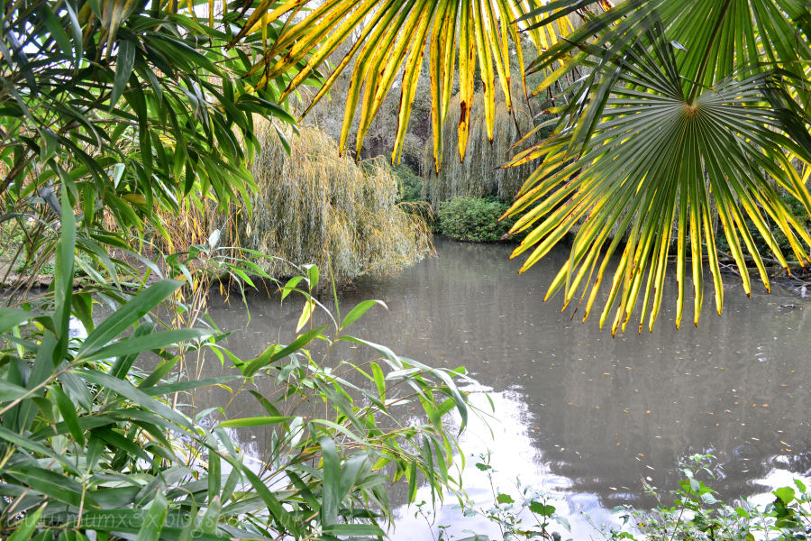 Pond at colchester zoo.