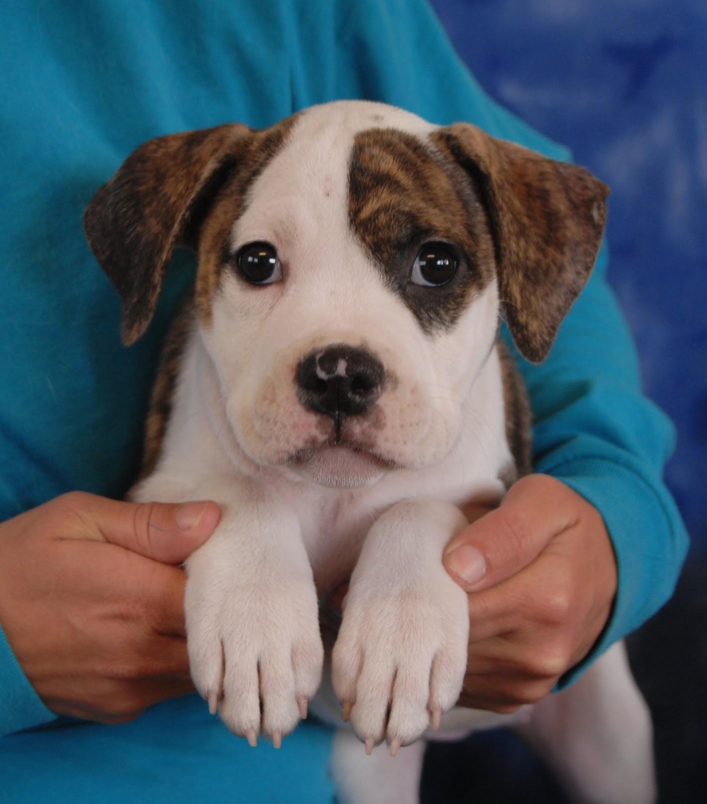 Burlington Spca Dogs For Adoption