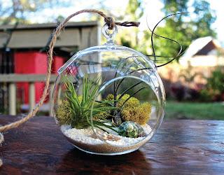 photo d'un terrarium