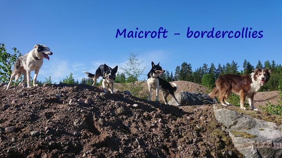 Maicroft - Bordercollies