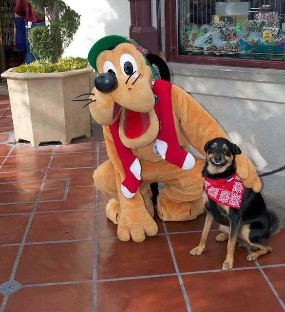 Funny animals of the week - 22 November 2013 (35 pics), dog takes a pictures with Pluto
