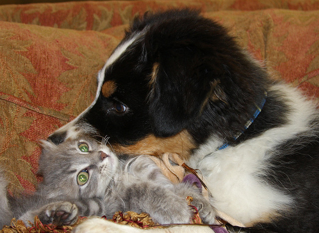 Pictures of cute puppies and kittens to inspire you