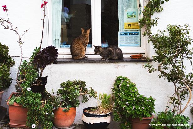casa de los gatos cadaques