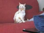 Tigro,nato il 7/1/2010