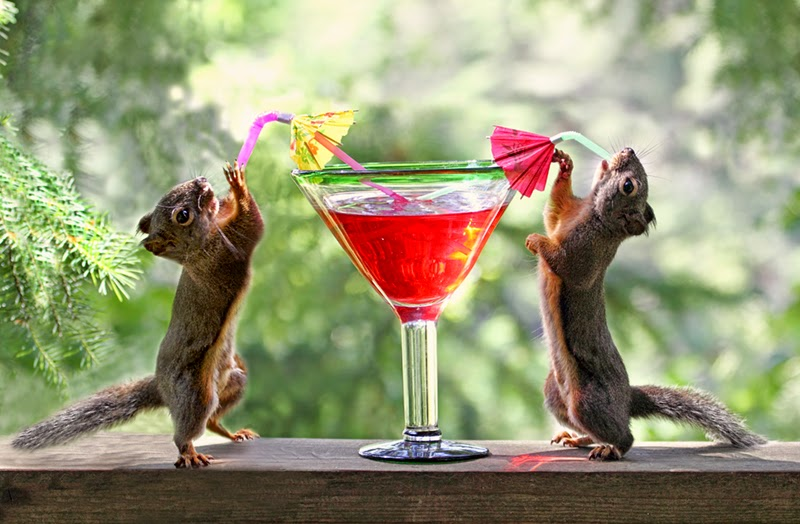 squirrels, cocktails, happy hour