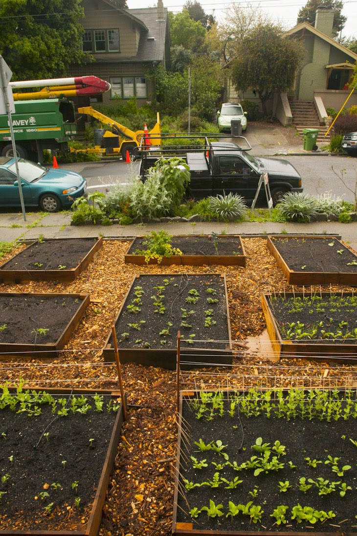 He Started With Some Boxes, 60 Days Later, The Neighbors Could Not Believe What He Built - Support systems started coming up as the seeds began sprouting.