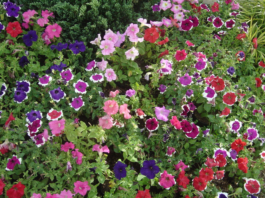 Wordl magzine beautiful flowers garden new for Beautiful garden plants